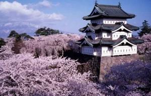 Japoneses celebram florescimento das cerejeiras um ano após tsunami