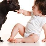 427493 Crianças e animais fotos 2 150x150 Crianças e animais: fotos
