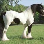 428440 Os cavalos mais belos do mundo 012 150x150 Os cavalos mais belos do mundo