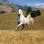 428440 Os cavalos mais belos do mundo 015 150x150 Os cavalos mais belos do mundo
