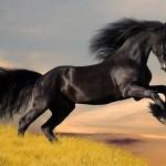 428440 Os cavalos mais belos do mundo 02 150x150 Os cavalos mais belos do mundo