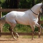428440 Os cavalos mais belos do mundo 04 150x150 Os cavalos mais belos do mundo