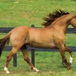 428440 Os cavalos mais belos do mundo 06 150x150 Os cavalos mais belos do mundo