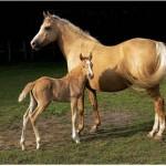 428440 Os cavalos mais belos do mundo 14 150x150 Os cavalos mais belos do mundo
