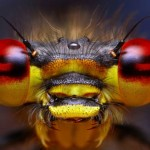 430396 Os insetos mais estranhos do mundo 12 150x150 Os insetos mais estranhos do mundo