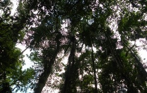 Regra para reflorestar áreas danificadas é excluída do Código Florestal