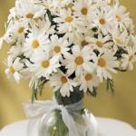 434669 Os mais belos arranjos de flores 20 150x150 Os mais belos arranjos de flores: fotos