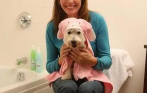 Como dar banho em cachorro: cuidados