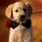 446001 Mensagens e imagens românticas para Facebook 150x150 Mensagens e imagens românticas para Facebook