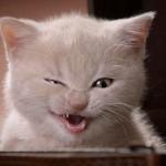 452252 As fotos mais engraçadas do mundo 19 150x150 As fotos mais engraçadas do mundo
