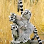452252 As fotos mais engraçadas do mundo 25 150x150 As fotos mais engraçadas do mundo