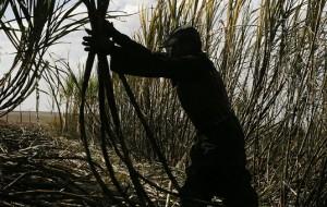 Senado acata medida que incentiva a produção de etanol