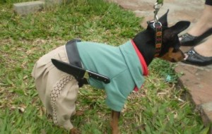 Fotos de cachorros fantasiados