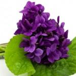 459233 Fotos de buquês de flores 07 150x150 Fotos de buquês de flores