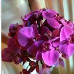 459233 Fotos de buquês de flores 14 150x150 Fotos de buquês de flores