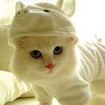 459946 Fotos de gatos fantasiados 01 150x150 Fotos de gatos fantasiados