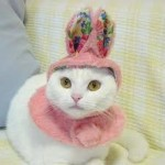459946 Fotos de gatos fantasiados 02 150x150 Fotos de gatos fantasiados