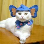 459946 Fotos de gatos fantasiados 07 150x150 Fotos de gatos fantasiados
