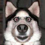 460162 Fotos de animais engraçados 03 150x150 Fotos de animais engraçados