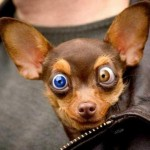 460162 Fotos de animais engraçados 08 150x150 Fotos de animais engraçados