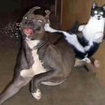 460162 Fotos de animais engraçados 14 150x150 Fotos de animais engraçados