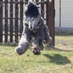 460162 Fotos de animais engraçados 18 150x150 Fotos de animais engraçados