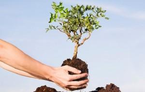 Dilma divulga medidas para celebrar o dia do Meio Ambiente