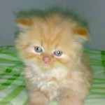 461494 Fotos de filhotes de gato bonitos 08 150x150 Fotos de filhotes de gato bonitos