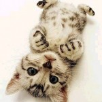 461494 Fotos de filhotes de gato bonitos 10 150x150 Fotos de filhotes de gato bonitos
