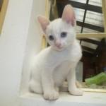 461494 Fotos de filhotes de gato bonitos 17 150x150 Fotos de filhotes de gato bonitos