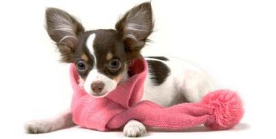 Proteja o seu cão do frio vestindo-o com roupas quentinhas. (Foto: Divulgação)
