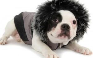 Como proteger os cães do frio