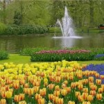 470111 Fotos da Holanda país das tulipas 06 150x150 Fotos da Holanda, país das tulipas
