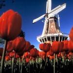 470111 Fotos da Holanda país das tulipas 15 150x150 Fotos da Holanda, país das tulipas