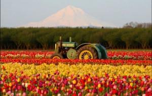 Fotos da Holanda, país das tulipas