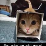481499 Fotos engraçadas com gato para facebook 11 150x150 Fotos engraçadas com gato para Facebook