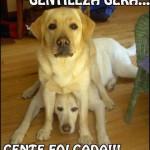 481502 Fotos engraçadas com cachorro para facebook 06 150x150 Fotos engraçadas com cachorros para Facebook
