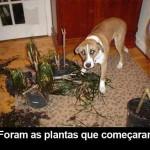 481502 Fotos engraçadas com cachorro para facebook 07 150x150 Fotos engraçadas com cachorros para Facebook