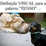 481502 Fotos engraçadas com cachorro para facebook 09 150x150 Fotos engraçadas com cachorros para Facebook