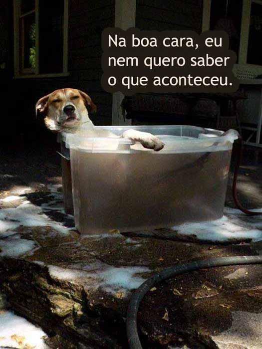 Fotos Engraçadas Com Cachorros Para Facebook