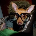 481502 Fotos engraçadas com cachorro para facebook 20 150x150 Fotos engraçadas com cachorros para Facebook