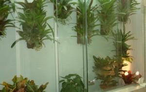 Plantas para decorar banheiros: dicas