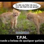 492805 Mensagens engraçadas sobre TPM para Facebook 06 150x150 Mensagens engraçadas sobre TPM para Facebook