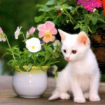 495243 Fotos de cachorros e gatos fofos 09 150x150 Fotos de cachorros e gatos fofos