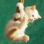 495243 Fotos de cachorros e gatos fofos 15 150x150 Fotos de cachorros e gatos fofos