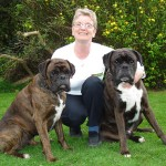 498514 Além de ser ótimo cão de guarda o boxer também serve de companhia. 150x150 Cães da raça boxer: fotos