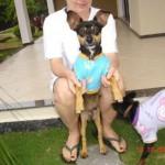 498889 fotos de caes da raca pinscher 14 150x150 Fotos de cães da raça Pinscher
