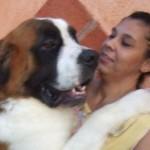499608 fotos de caes da raça sao bernardo 31 150x150 Fotos de cães da raça São Bernardo