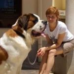499608 fotos de caes da raça sao bernardo 9 150x150 Fotos de cães da raça São Bernardo