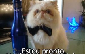 Fotos e montagens de gatos para facebook